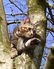 weans in tree